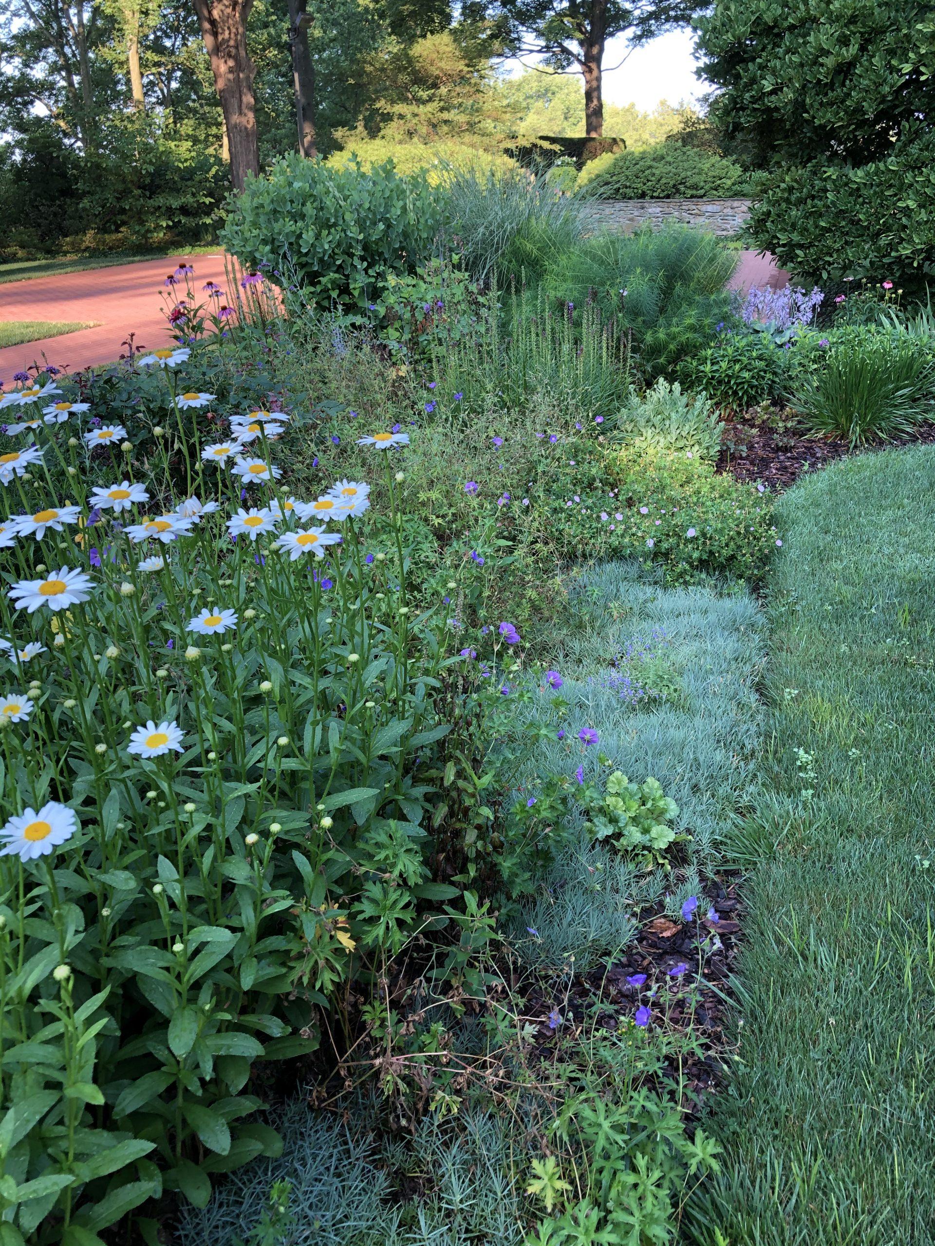 Drumore summer perennial beds