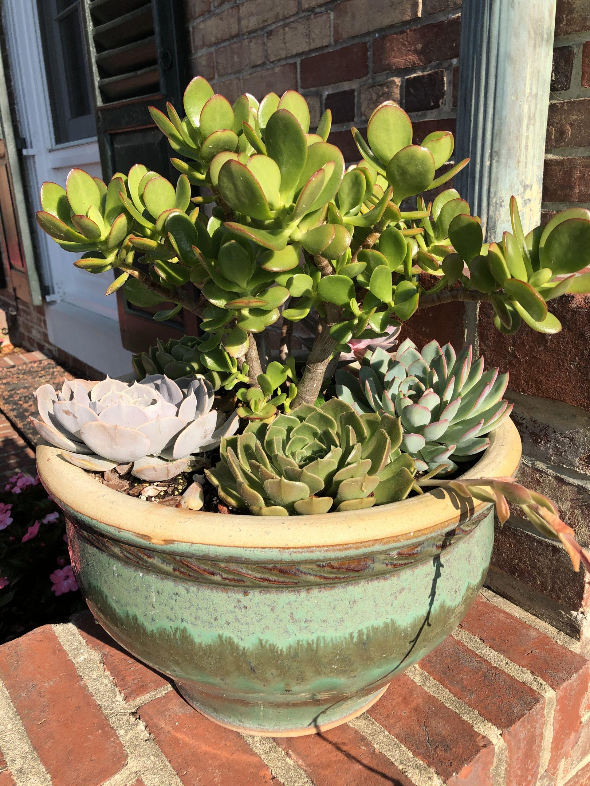 Varied succulents